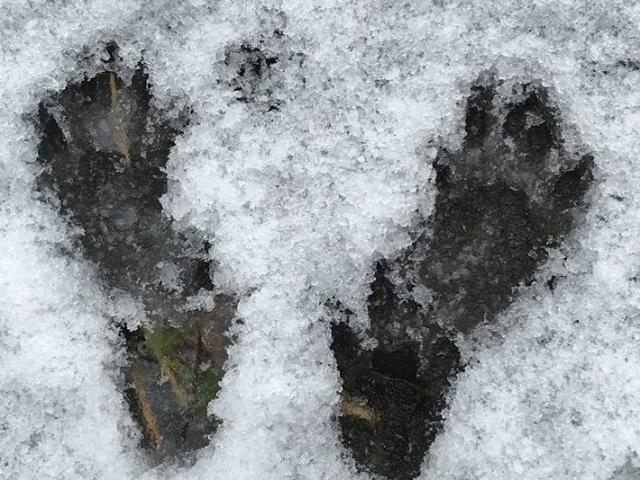 Snow Stories: Animal Track Edition