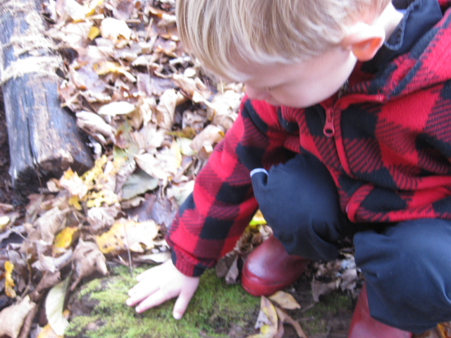 Nature's Little Explorers: Fall Magic Series!