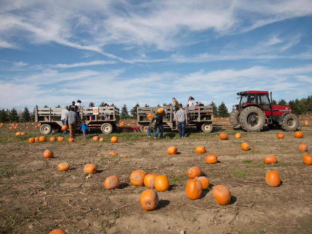 Critz Farms Fall Harvest Celebration